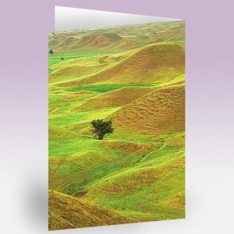 کارت پستال 14.5×21 (چمن زار و تک درخت)